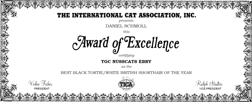 Nusscats Ebby - Best Black TortieWhite Britisch Kurzhaar Katze - International 2018